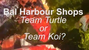 Team turtle or team koy