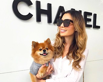 Canine Couture Bal Harbour Shops Edition