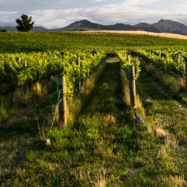 Scenic view of the Seresin Vineyards