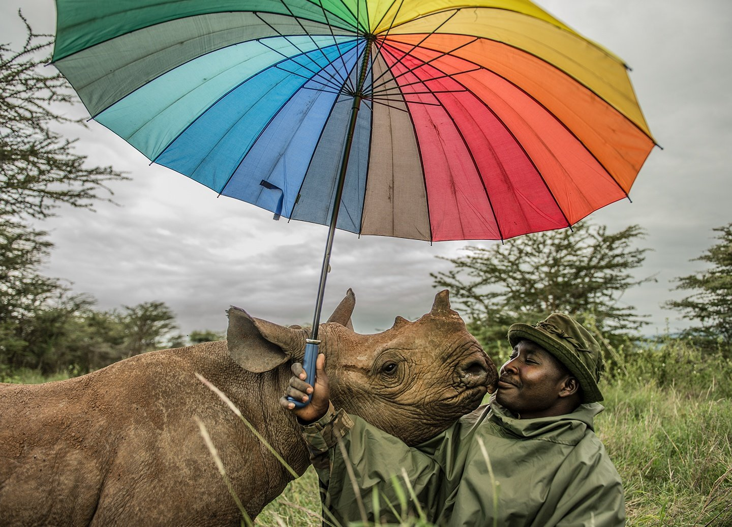 Kamara is nuzzled by a black rhino named Kilifi, who he hand-raised along with two other baby rhinos at Lewa Wildlife Conservancy in Kenya.